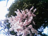 06-03-12_12-53(2).jpg